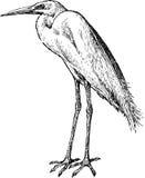 Egret Imagens de Stock Royalty Free