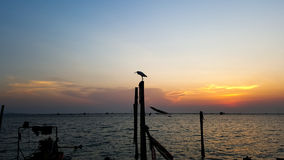egret Imagen de archivo