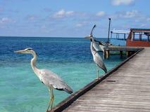 Egret on the beach stock photo