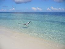 Egret on the beach royalty free stock photos