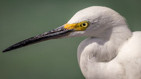 Egret at the Beach stock images
