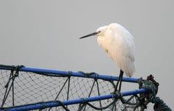 Egret bianco sulla gabbia netta Immagini Stock Libere da Diritti