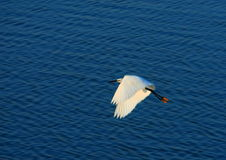 Free Egret Bird Stock Photo - 3070400