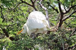 Egret bird standing in a tree Stock Photo