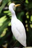 Egret Bird Royalty Free Stock Photography