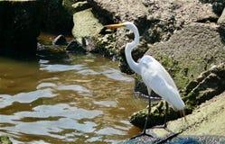 egret branco fotos de stock