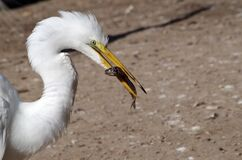 Egret and breakfast