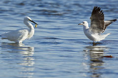 Fishing egret Stock Photo