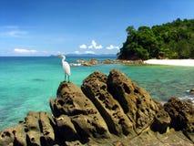 Egret che si leva in piedi sulla roccia in bella isola Immagine Stock Libera da Diritti