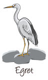 Egret, Color Illustration Royalty Free Stock Photo