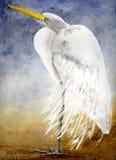Egret della Luisiana Fotografie Stock
