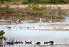 egret dośrodkowa Obraz Royalty Free