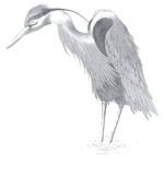 Egret drawing Stock Photos