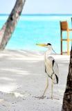 Egret en Maldives Fotos de archivo