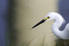 Egret en un fondo surrealista Foto de archivo libre de regalías