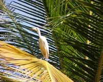 Egret en una hoja de palma foto de archivo
