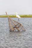 Egret. On The fish trap in lagoon Royalty Free Stock Photography