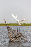 Egret. On The fish trap in lagoon Stock Image