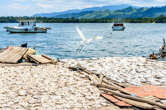 Egret flies over drying fish Stock Images