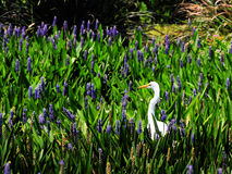 Egret and Flower Royalty Free Stock Image