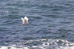 Egret flying Stock Photos
