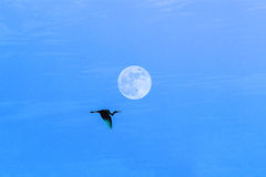 Egret flying in the sky Stock Photography
