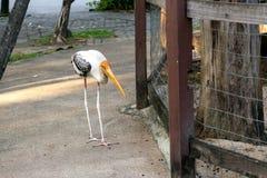 Egret or heron Royalty Free Stock Photo