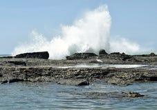 Egret i ocean Zdjęcia Stock