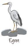 Egret, Kolor Ilustracja royalty ilustracja
