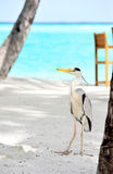 Egret in Maldives Stock Photos
