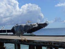 Egret na plaży zdjęcia stock