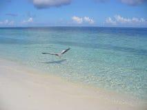 Egret na plaży zdjęcia royalty free