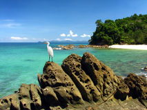 Egret que se coloca en roca en la isla hermosa imagen de archivo libre de regalías