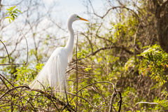 Egret rests in a tree Stock Photo