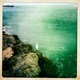Egret sea bird on rocks Stock Photography