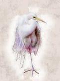 Egret Snowy - иллюстрация цвета воды иллюстрация штока
