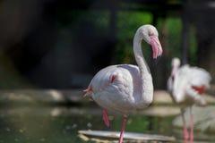 Egret standing in water. Stock Image