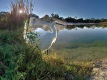 Egret Sunrise Stock Images