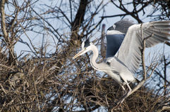 Egret in a tree Stock Photos