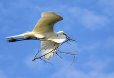 Egret Tree Royalty Free Stock Images