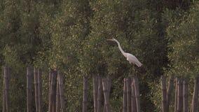 Egret umieszcza na bambusowym fiszorku zbiory