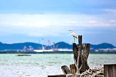 Egret is waiting prey on foremast boat at seaside , nature Stock Photography