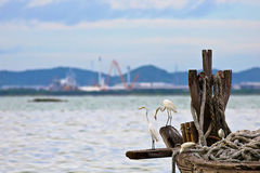 Egret is waiting prey in old fishing boat at seaside, nature Stock Photography