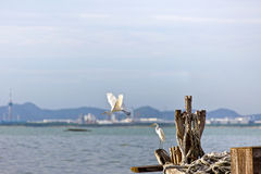 Egret is waiting prey in old fishing boat at seaside, nature Royalty Free Stock Image