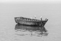 Egret and wood boat Royalty Free Stock Photo