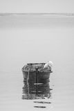 Egret and wood boat Royalty Free Stock Images