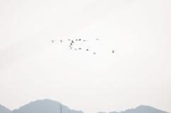 Egrets летают Стоковое Изображение RF