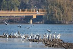 Egrets и цапли Стоковые Изображения RF
