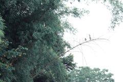 Egrets на ветви Стоковые Фотографии RF