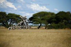 egrets немногая Стоковая Фотография